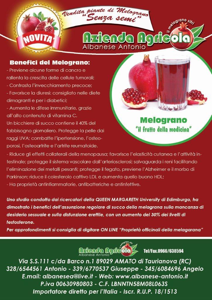 IL FRUTTO DELLA MEDICINA Piante di Melograno Melagrana a cespuglio, varietà Sifri senza seme